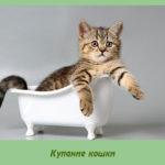 Купание кошки