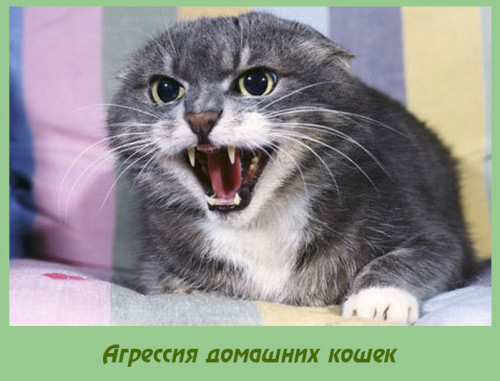 агрессия домашней кошки
