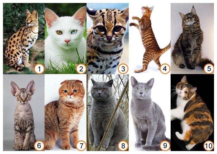 какие кошки самые добрые