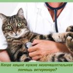 Когда кошке нужна незамедлительная помощь ветеринара?