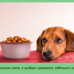 Что нужно знать о выборе здорового собачьего корма