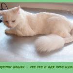 Груминг кошек – что это и для чего нужно