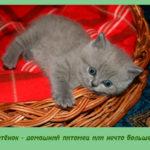 Котёнок — домашний питомец или нечто большее?