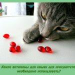 Какие витамины для кошек для иммунитета необходимо использовать?