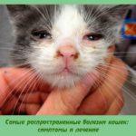 Самые распространенные болезни кошек: симптомы и лечение