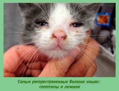 распространенные болезни кошек