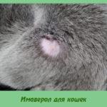 Имаверол для кошек