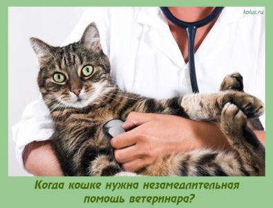 помощь ветеринара