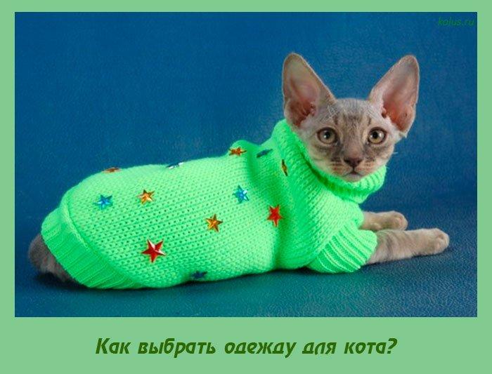 Как выбрать одежду для кота?