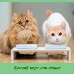 Лучший корм для кошки