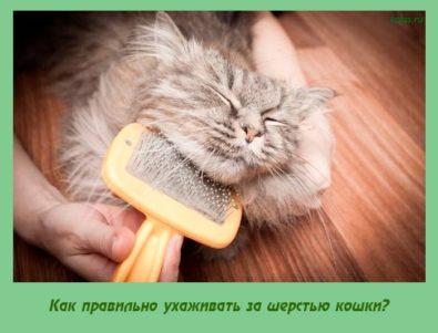 Как правильно ухаживать за шерстью кошки?