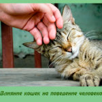 Влияние кошек на поведение человека