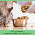 Корм для кошек – идеальный выбор для вашей киски