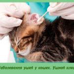 Заболевания ушей у кошек. Ушной клещ