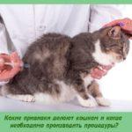 Какие прививки делают кошкам и когда необходимо производить процедуры?