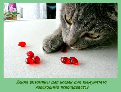 витамины для кошек