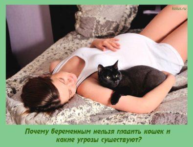 Почему беременным нельзя гладить кошек