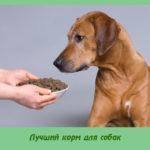 Лучший корм для собак