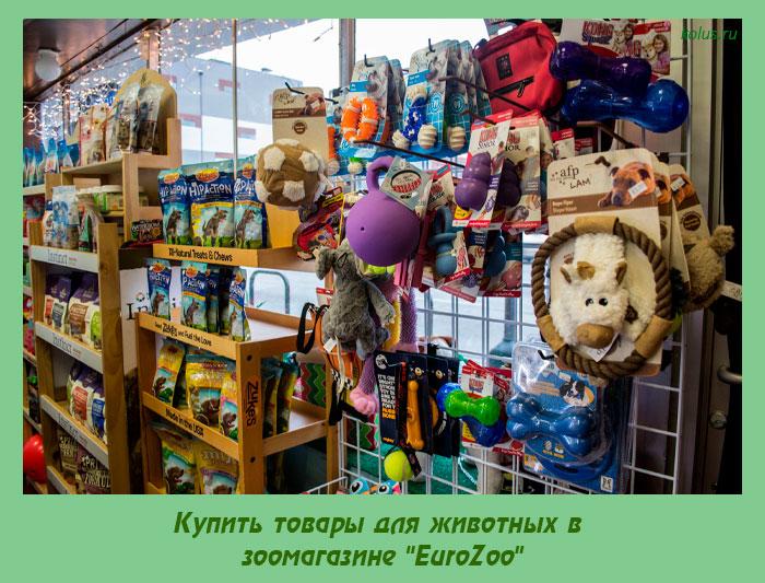 """Купить товары для животных в зоомагазине """"EuroZoo"""""""