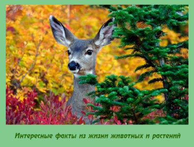 Интересные факты из жизни животных и растений